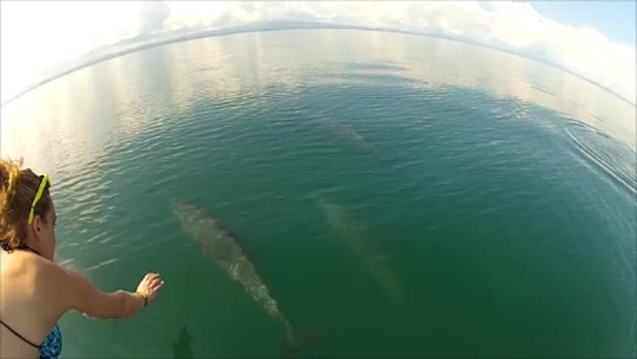 dolphin_safari_osa_peninsula