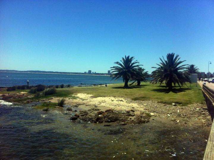 punta_del_este_coast
