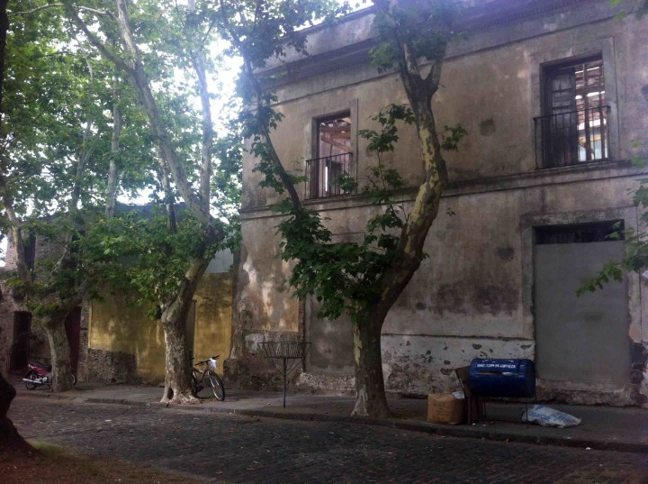 trees_abandon_building_colonia_uruguay