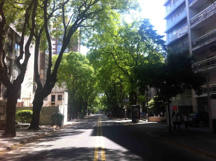 trees_sidestreets_montevideo