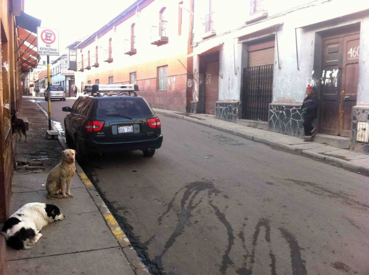 dogs_being_dogs_potosi_bolivia