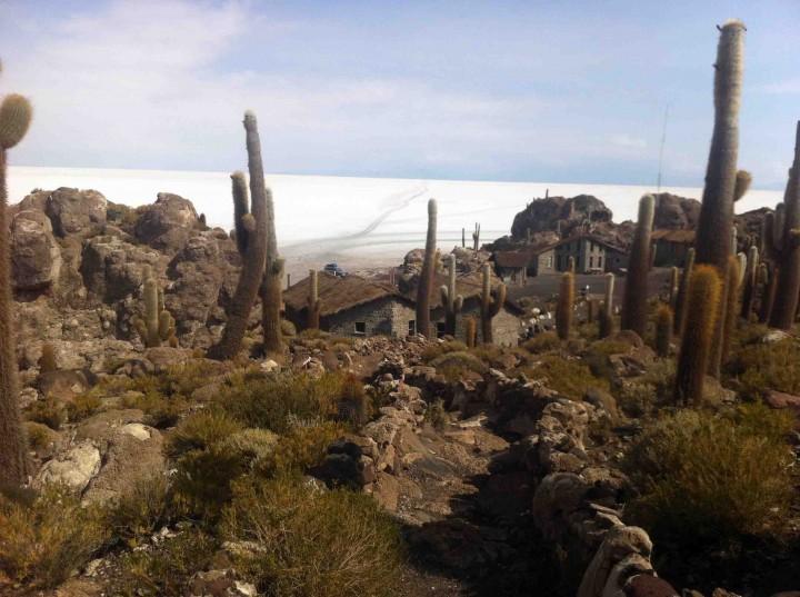 isla_incahuasi_salt_lakes_cactus