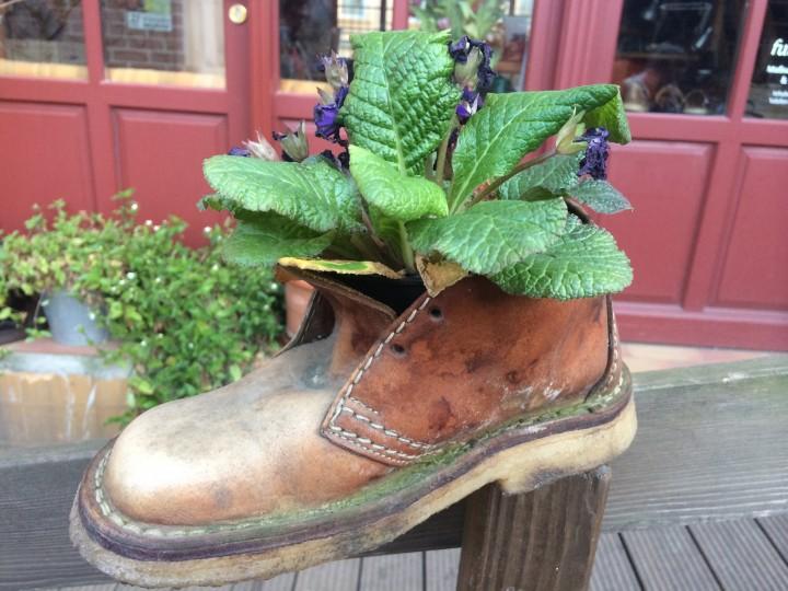 shoe_plant