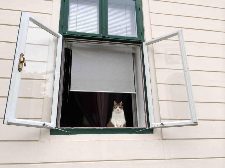 kitty_zagreb_croatia
