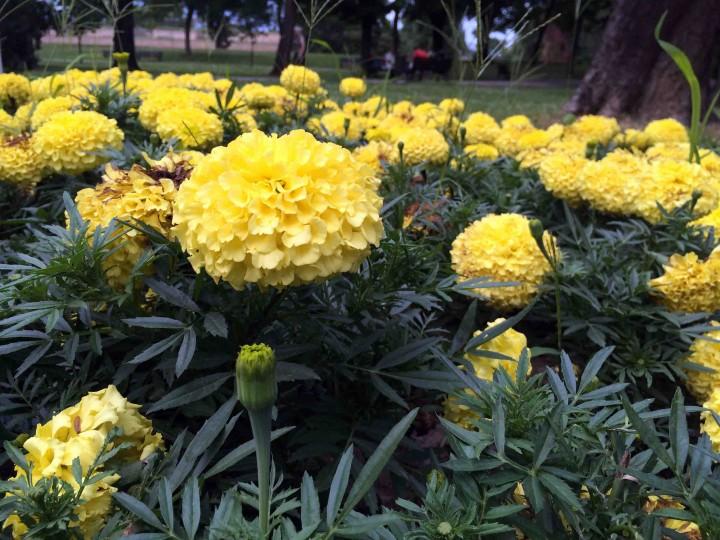 flowers_belgrade_serbia