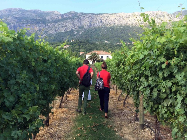 vineyards_konavle_croatia