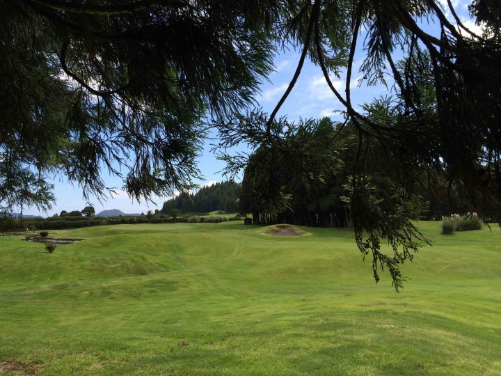 deep_in_trees_furnas_golf_course