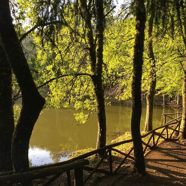 gargano_umbra_forest_italy