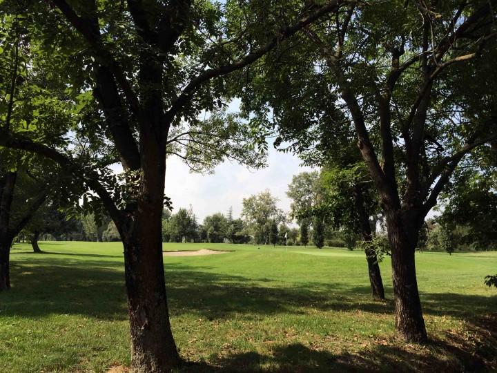 green_through_trees_golf_club_bologna