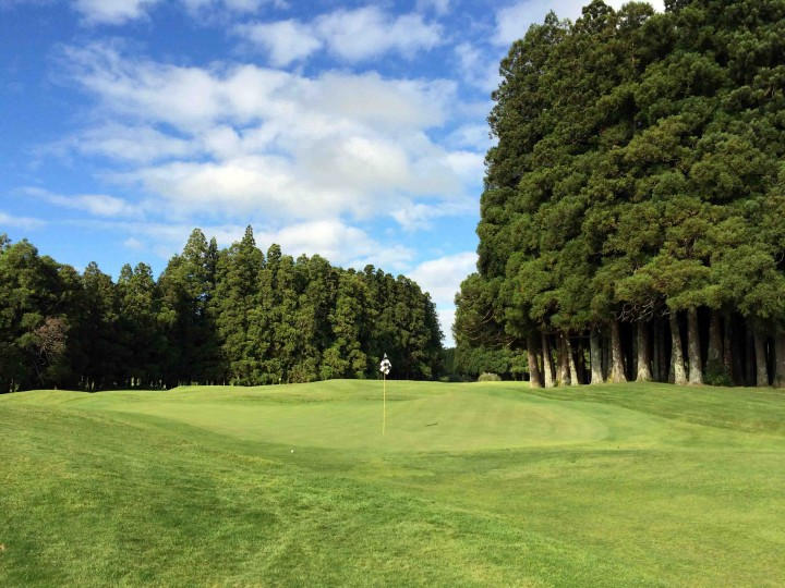 japanese_cedars_furnas_golf_course