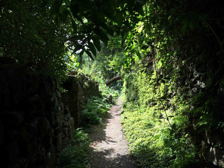 canopy_hiking