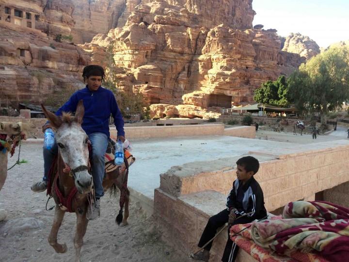 donkeys_petra_jordan
