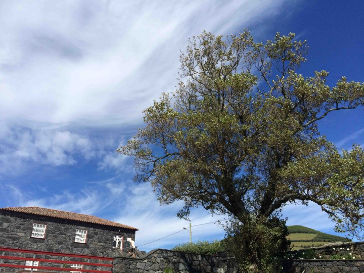stone_houses_sao_jorge_azores