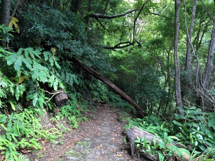 trail_faial_da_terra