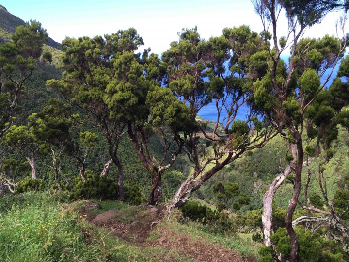 trees_hiking_sao_jorge_azores