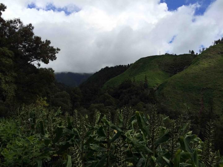views_faial_da_terra_trail