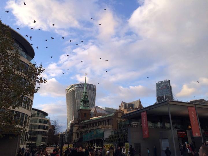 birds_skyline_london_england