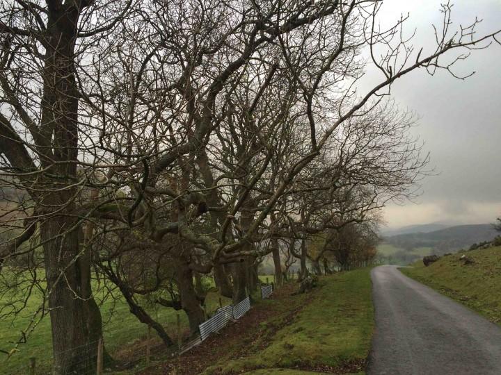lanes_north_wales