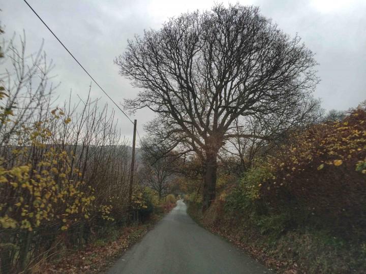 narrow_lanes_north_wales