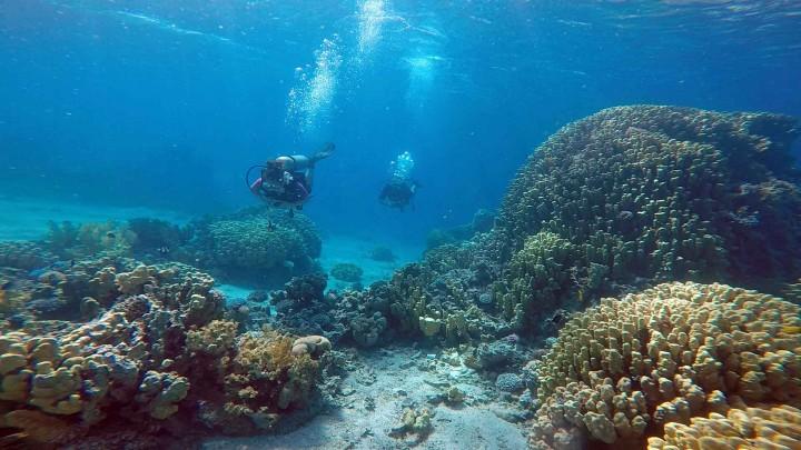 Scuba diving in the red sea jordan for Aqaba dive