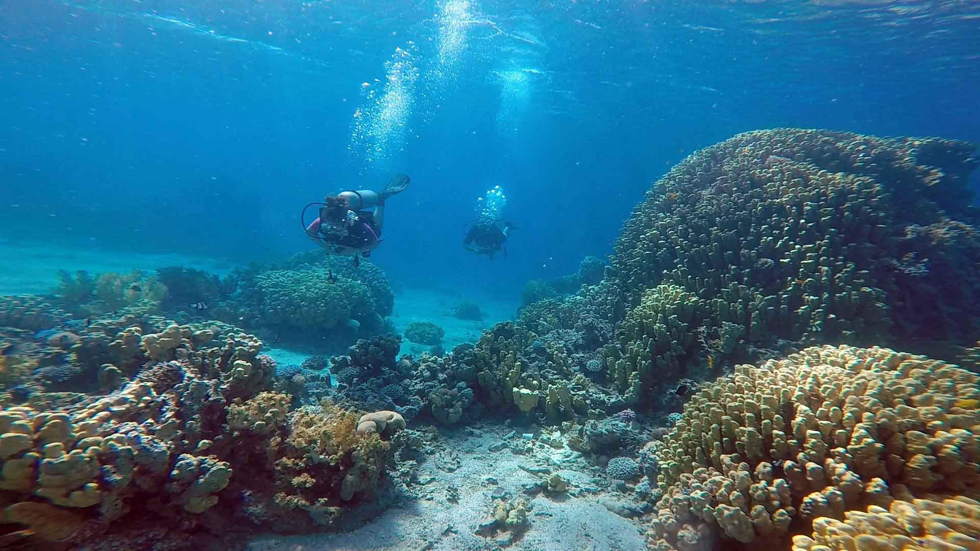 Scuba Diving in the Red Sea, Jordan