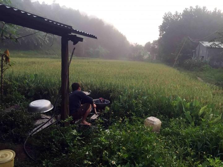 rice_fields_bho_hoong_vietnam