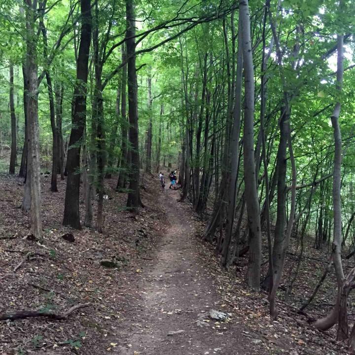 treelined_hiking_trail