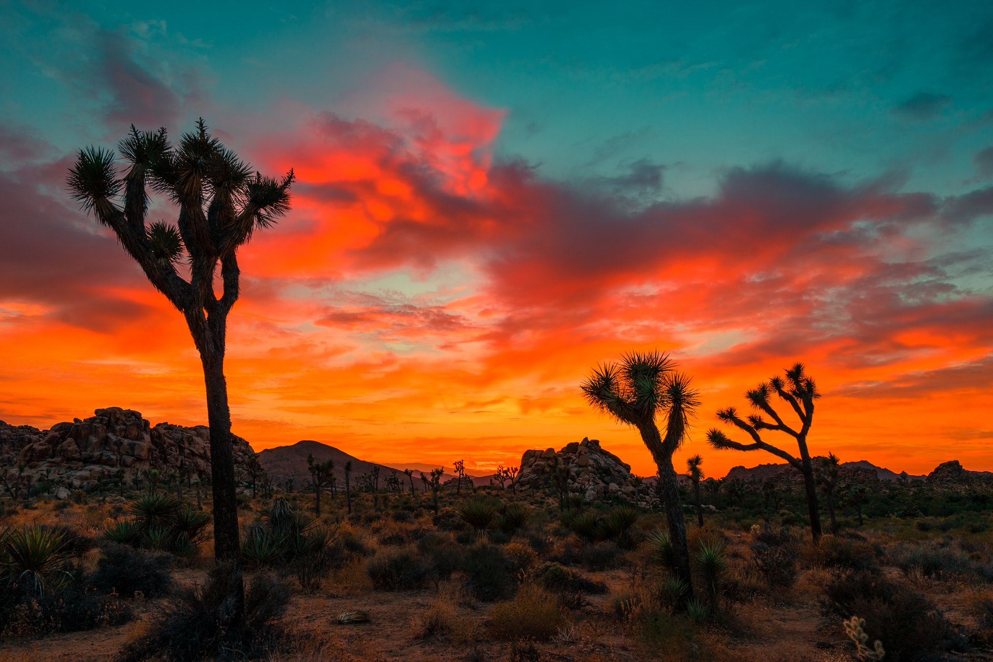 Joshua Tree National Park is known for its sunsets.