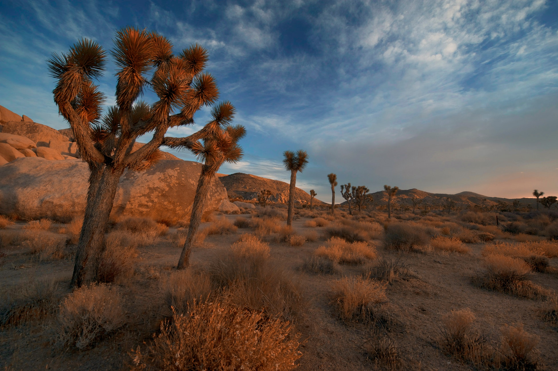 What to do in Joshua Tree? Enjoy the outdoors!